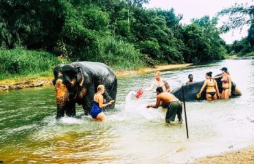 elephant_bathing
