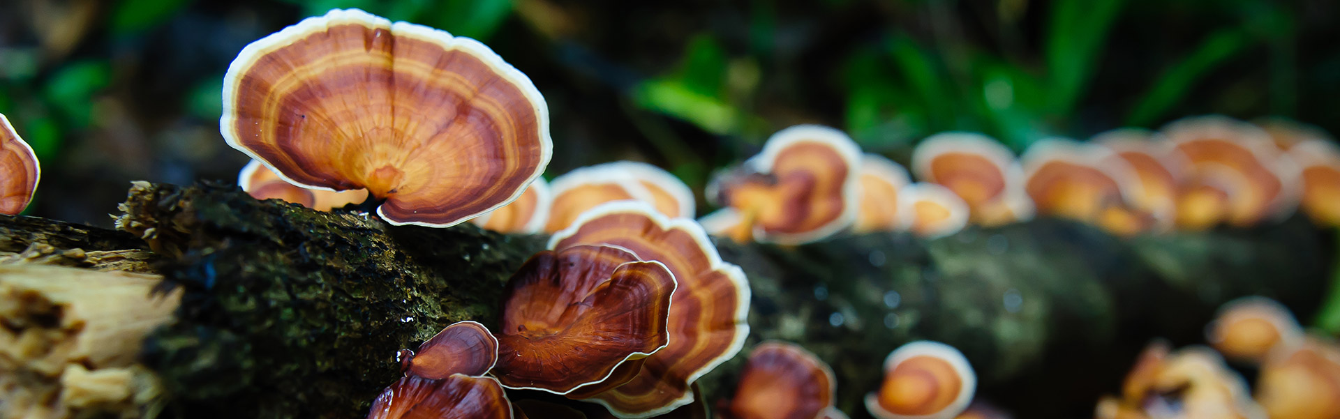 Mushrooms at Khao Sok National Park